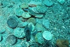 Monetary Treasure of the Punic Wars