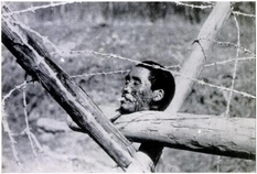 Mass executions, hunger and bullying: the brutal crimes of the Second World War in the selection of photos