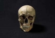 Обличчя людини, що жила 1300 років тому: вчені відтворили зовнішність Аделазія Ельбахуса