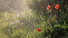 Сильные дожди и приборный поиск: одно другому не мешает