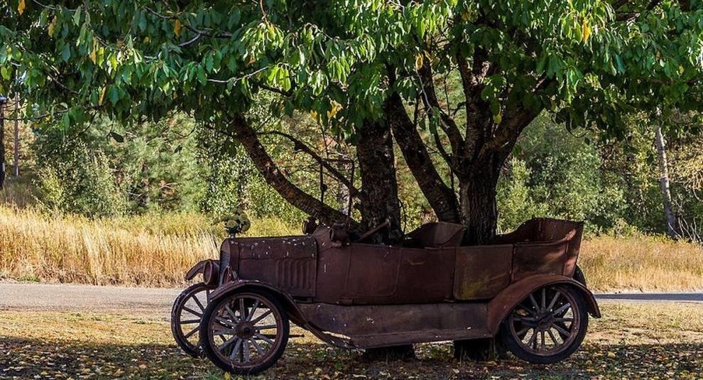 Природа и техника: деревья, проросшие через старые машины