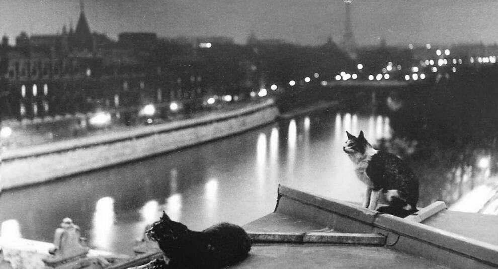 Коты на улицах Парижа первой половины XX века