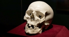 The marble skull from the residence of the Saxon monarchs turned out to be the work of Bernini