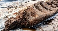 В ирландских болотах найден древний деревянный идол