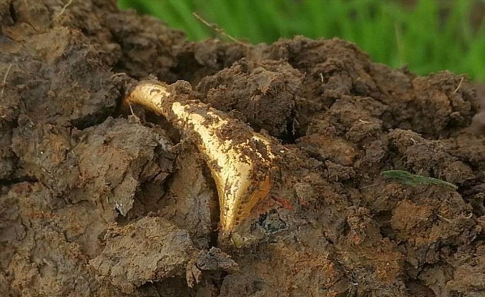 В Британии поисковик нашел золотое кольцо периода правления королевы Елизаветы I