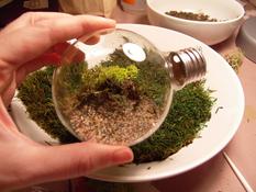 Terrarium in an electric bulb