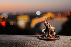 """Жил-был слон, или как """"Violity"""" участвует в возрождении символов Киева"""