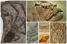 Как образуются окаменелости?