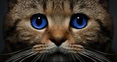 13% людей понимают мимику кошек — ученые