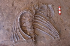 Археологи нашли скелет неандертальца