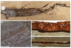 Ученые из Англии нашли жевательную резинку, которой насчитывается 110 млн лет (Инфографика)
