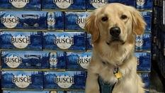 Возьми собаку из приюта и получи 3-месячный запас пива — карантинная акция пивоварни из США