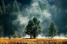 Леса не могут приспособиться к меняющемуся климату — исследователи