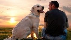Ученые из США выяснили, как точно определить «человеческий» возраст собаки (Инфографика)