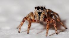 В Австралии нашли пауков, которые в своих норах строят входные двери