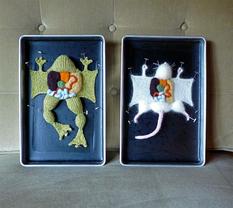 Пособие по анатомии: американка вяжет препарированных животных