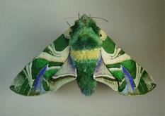 Как живые: текстильные насекомые от японской мастерицы