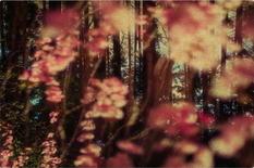 Размытые фотографии окружающей природы