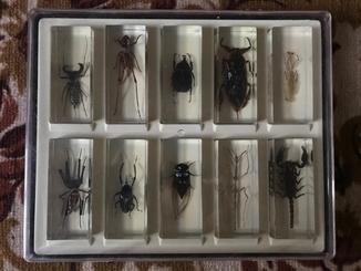 Коллекция настоящие насекомык и их знакомые