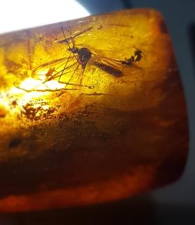 4 разных насекомых в янтаре и другие инклюзы