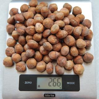 Насіння ведмежого горіха(ліщина деревовидна, турецька ліщина)