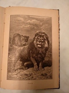 1903 Мифы Предания о животных