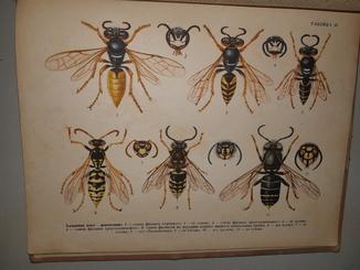 1955 Справочник пчеловода