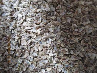 Насіння кропу 250 грам