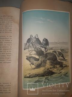1866 Жизнь птиц с 27 цветными иллюстрациями