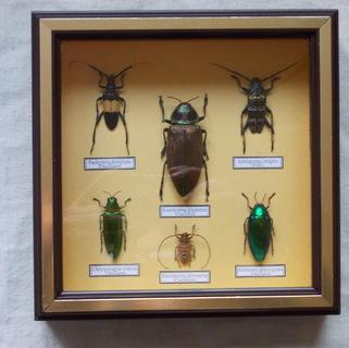 Тропические жуки в рамке №2