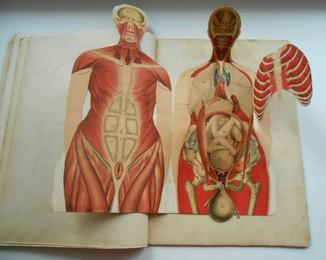 2 книги-альбома разборные модели: Человъкъ, Женщина. Киевъ 1904,1907гг
