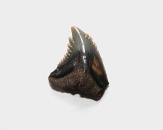 Зуб кривозубої акули неогенового періоду з США