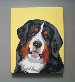 Бернский зенненхунд (Bernese Mountain Dog)