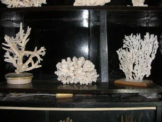 Большая коллекция кораллов и морских губок