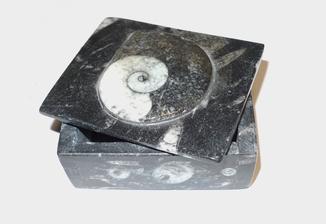 Шкатулка з амоноідеєю і ортоцерасами девонського періоду