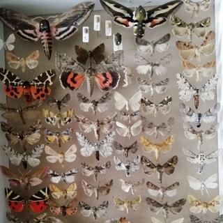 Энтомологическая коллекция №3