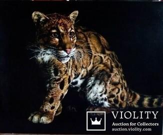Дикие кошки-Облачный леопард (Дымчатый леопард). автор Березина К.