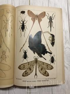 1910 Насекомые Эффектная книга с раскрашенными рисунками